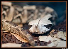 Reptil (SamJF) Tags: madrid naturaleza zoo sony reptiles carlzeiss 13518 alpha850