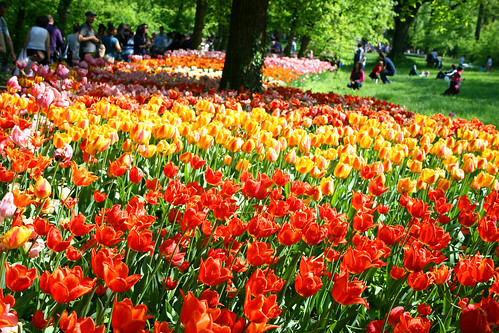 foto Mostra tulipani al castello di Pralormo Piemonte