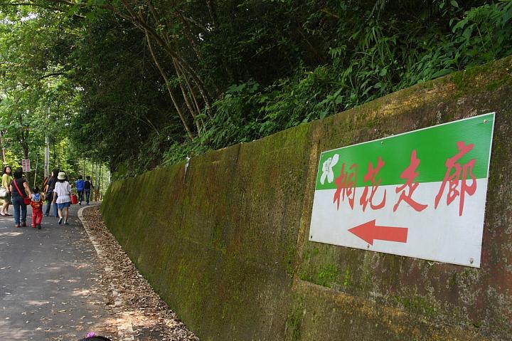 苗栗桐花走廊0021