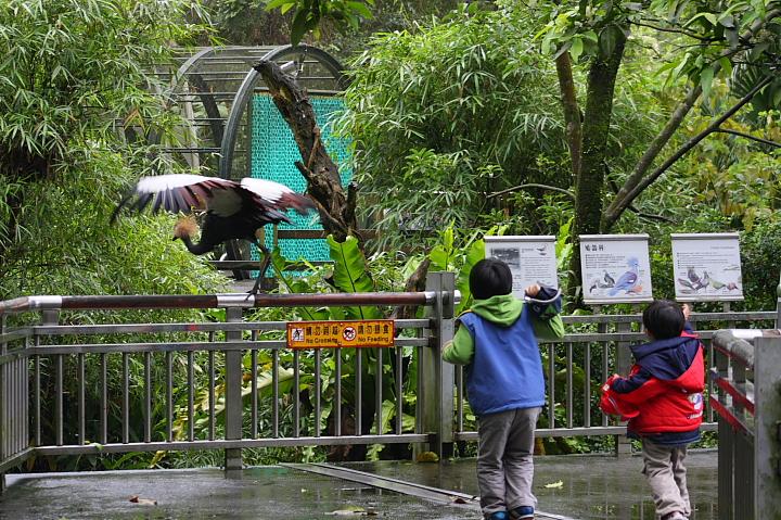 台北木柵動物園0025