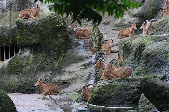 台北木柵動物園0057