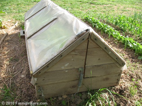 Amish Cold Frame 7