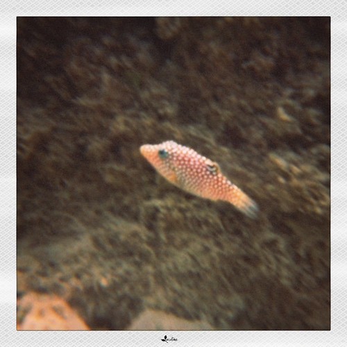 polka fishy