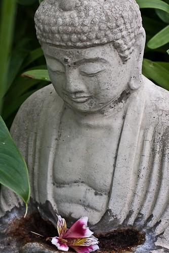 Buddha  138/365