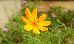 Outra flor (Anselmo Garrido) Tags: macro stock omnia flickrstock