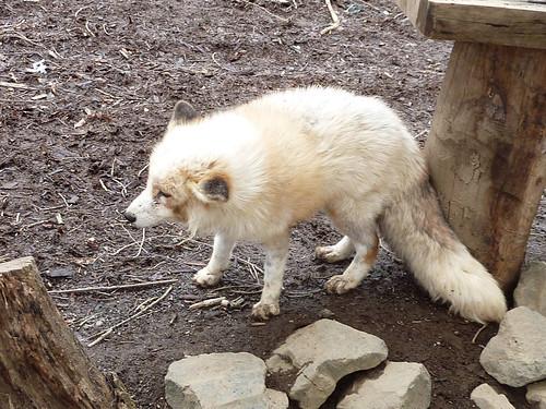 fox07