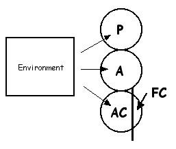 FC desentitization