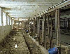 let us now praise (dairy) men {4/8} (fotobug8) Tags: family color kodak farm large 4x5 format dairy 160vc
