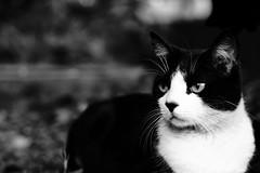 (Héctor (poGoSOLo) Duque) Tags: white black blanco contrast cat negro gato contraste héctor duque pogosolo