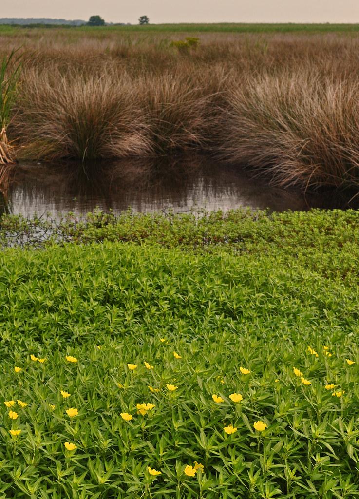 Layered Wetland