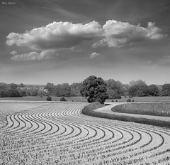 Symphony (Ben Heine) Tags: trees summer blackandwhite terrain music cloud mist art nature monochrome field lines composite composition garden season landscape photography lights freedom countryside vanishingpoint vineyard scenery belgique notes cloudy earth path air horizon curves birth harvest meadow peaceful ground korea poetic farmland oxygen melody pasture libert harmony terre environment mead quite breathe symphony brouillard emptiness province opus musique ecosystem enclosure rochefort fertile vrijheid cropland courbes hinterland symphonie lessive leplatpays mywinners benheine seenonflickr flickrunited fleursetpaysages samsungnx10 samsungdlight infotheartisterycom