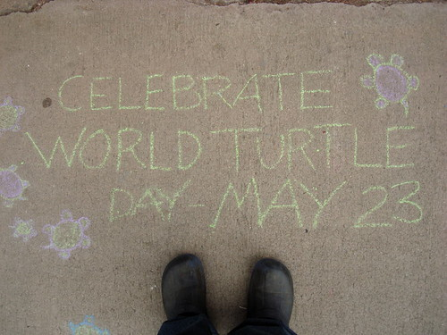 sidewalk chalk standing there celebrate world turtle day