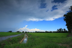 road to nowhere.., rain's coming (ChR!s H@rR!0t) Tags: field canon open wide padi spaces 1000d