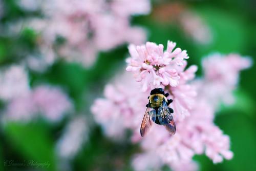 Tinkerbell & Bee