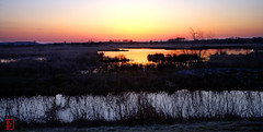 Wetlands Lullaby (Kansas Poetry (Patrick)) Tags: lawrencekansas bakerwetlands wakarusawetlands patricknancyplantshopping