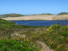 Abbotts Lagoon (Point Reyes)