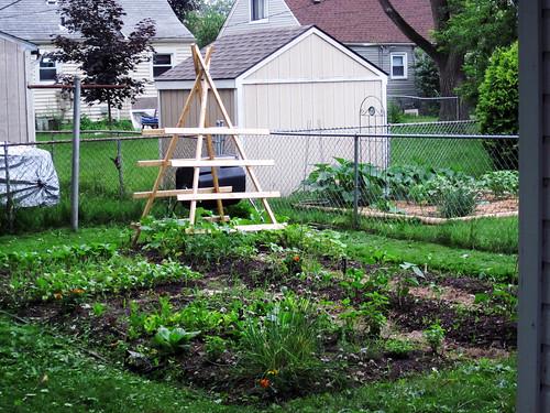 2010 Garden: Week 4