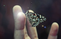 Touch of Delicacy (GREGORY CINQUE) Tags: beautiful butterfly wings finger nephew delicacy fingertip