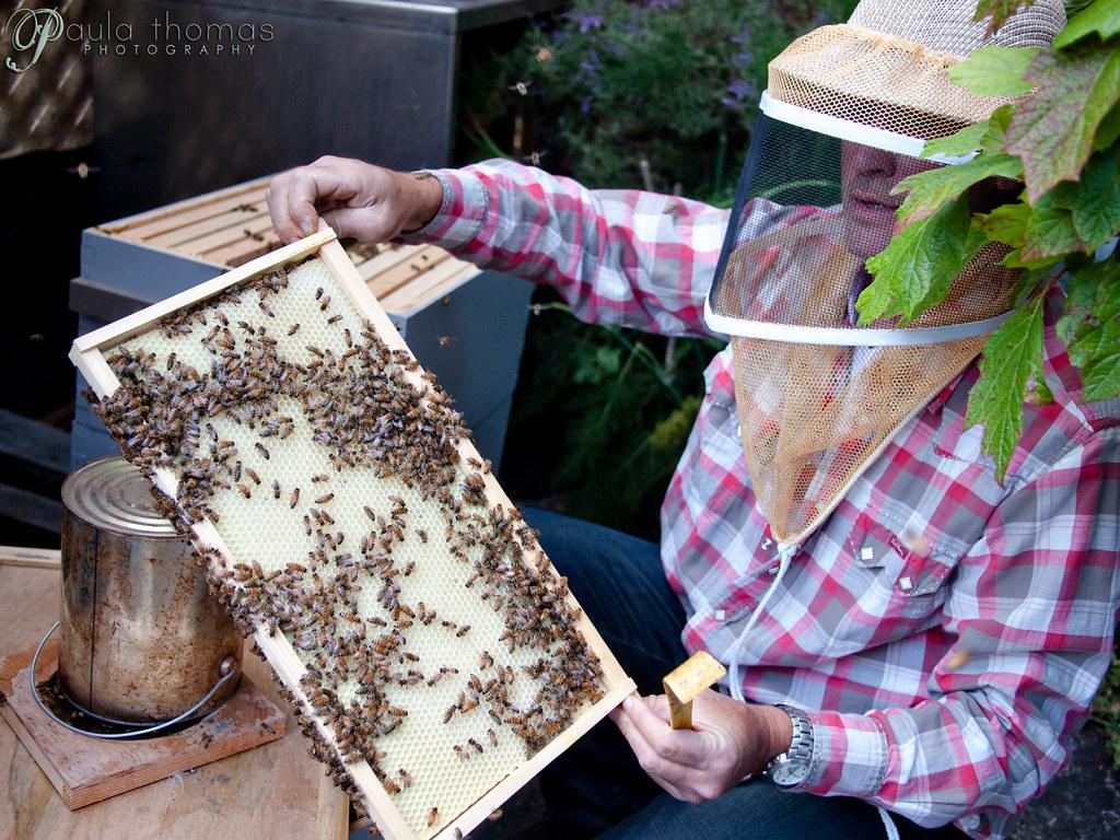 Corky Luster Ballard Bee Guy