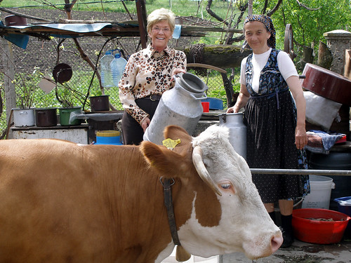 JoLuck With Cow In Europe