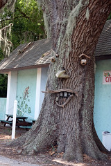 Homemade Tree Face (Richard Elzey) Tags: lake tree home face weird spring hand florida handmade hwy made homemade treeface springlake brooksville elzey boyettscitrusandattraction springlakehwy
