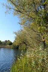 Ufer (ThomasKohler) Tags: autumn lake fall germany deutschland see herbst feisneck seenplatte warenmritz mritzsee mueritzsee warenmueritz feisnecksee