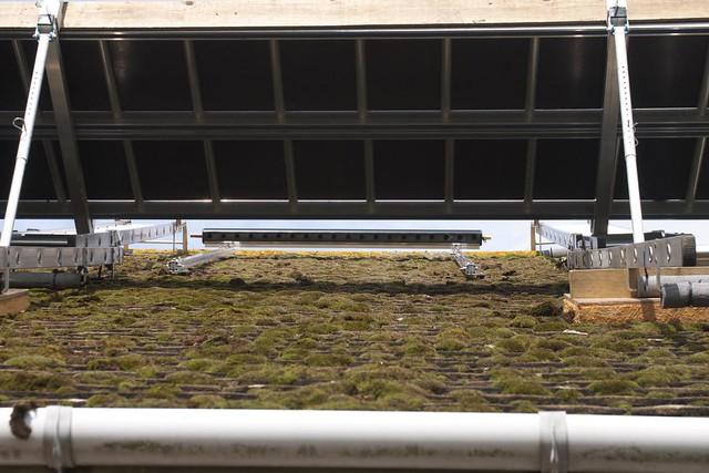Peplers In Rye Eco Refurbishment Installing Solar Water