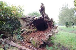 Woodland regen in miniature