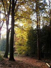Waldlicht (Sigi09) Tags: herbst wald herbstsonne wildenloh