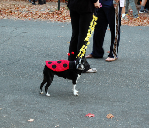 Halloween on Hanover