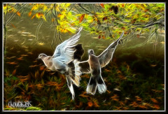 Touched by an Angel (Choulabags) Tags: hearts 1001nights doves mywinners choulabags bestofmywinners blinkagain fractatius