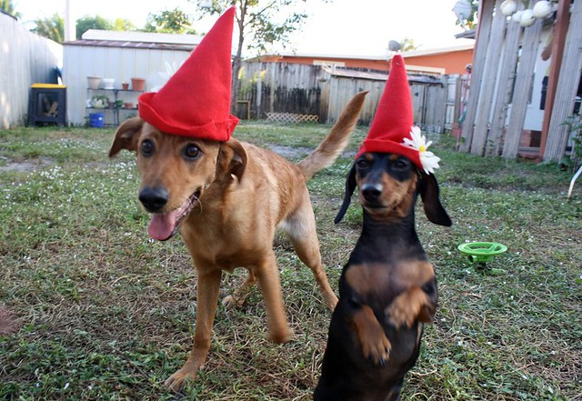 Gnome doggies