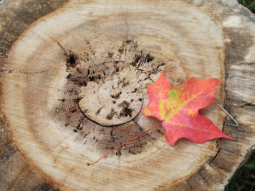 Turning leaf on cut log