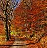 A sunny November day (Ingrid0804) Tags: wood november autumn trees denmark path autumncolours colorphotoaward worldwidelandscapes natureselegantshots 100commentgroup
