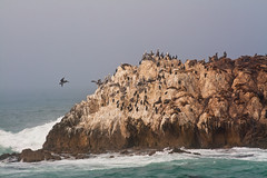 Tanning (JoLoLog) Tags: california usa water birds monterey joe pacificocean pebblebeach seals 17miledrive sealions canonxsi birdrockviewpoint