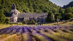 DSC1899 Abbaye Notre-Dame de Sénanque (Ruggero Poggianella Photostream ©) Tags: francia2017 francia france sénanque abbaye notredame de abbayenotredamedesénanque gordes