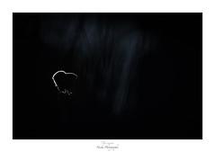 Sensuelle (Naska Photographie) Tags: naska photographie photo photographe paysage proxy proxyphoto printemps papillon macro macrophotographie macrophoto butterfly butterflie extérieur nature sauvage insectes azuré argus nuit night minimaliste minimalisme noir et blanc black white bw nb silhouette monochrome ombre landscape bokeh flare color couleur light