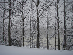 Snow scene looking out on the lake