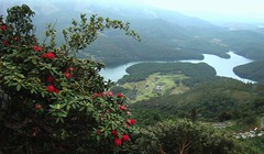 Nilgiris - Avalanche lake (Indianature SG) Tags: india lake nature biosphere rhododendron shola forests grasslands tamilnadu westernghats avalanche nilgiris avalanchelake nbr 2400m indianature tneb nilgirisbiospherereserve snonymous