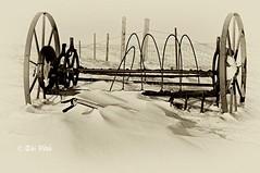 In snow , not sand (Toi-Vido) Tags: old winter bw snow nature outdoors island iceland nikon vestmannaeyjar sland nttra heimaey snjr vetur toi vido outofdoors d5000 artofimages nikond5000 bestcapturesaoi ti vd
