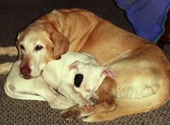 <Samsung i8, Samsung VLUU i8> (Hood River Adopt A Dog) Tags: photo cuties initial upload010410