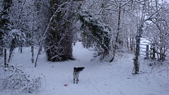 DSC04115 (edwardsgt) Tags: snow january tring 2010