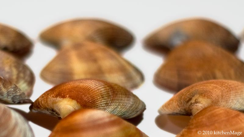 01.09.10 steamer shells