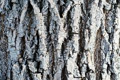 Parallel Universe (DEARTH !) Tags: park winter tree delete10 delete9 delete5 delete2 delete6 delete7 delete8 delete3 delete delete4 denver bark trunk save1 cheeseman dearth deletedbydeletemeuncensored