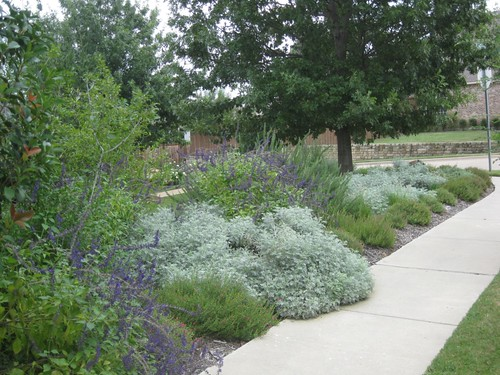 Frontyard gardening landscaping