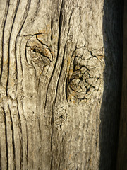 Wood 2 (gripspix) Tags: wood decay holz weatherd verwittert 20091120