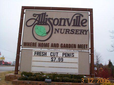 Penis blooms