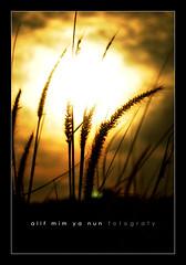 sillhouette of summer (alif  mim  ya  nun) Tags: morning light summer sun white black field grass silhouette sunrise lite rising nikon glorious malaysia frame flare fav rise fabulous favourite siluet sillhouette terengganu pagi marang fotografy siluetta alifmimyanun silwek