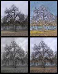 That Tree HDR Quad-1 (Sweet Sauer Photos (Matthew)) Tags: park beauty print exposure riverside ks quad creation kansas wichita hdr thattree qtpfsgui