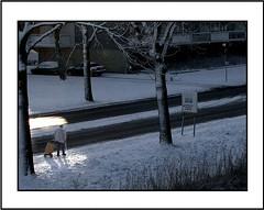 Street / Straat (Theo Kelderman) Tags: street trees winter shadow people woman snow holland haarlem netherlands bomen sneeuw nederland schaduw vrouw januari 2010 schalkwijk straat mensen theokeldermanphotography